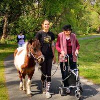 Les poneys de retour chez les Séniors