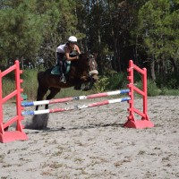 fête du cheval sept 2018