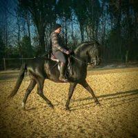 Nouvelle carrière de 60x30 en sable de Fontainebleau